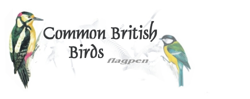 22 of Britains most common birds on one pen